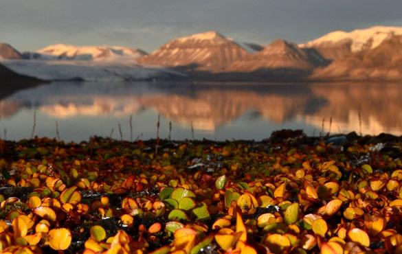 Ártico. Fotos: gentileza Juan Manuel Lirio