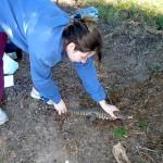 A partir del Proyecto Iguana, puesto en marcha en 2007, se logró una importante recuperación de las poblaciones naturales de esta especie. Fotos: gentileza Marta Mudry.