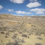 """LLos fósiles fueron encontrados en un área denominada """"Salado Sur"""", provincia de Neuquén."""