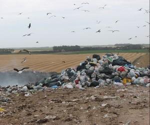 Los basurales (que aumentaron por el crecimiento de la población en la costa de Chubut), sumados a los residuos de la actividad pesquera, quedan a disposición de las aves que pueden aprovecharlos como alimento. Foto: www.prensa.argentina.ar