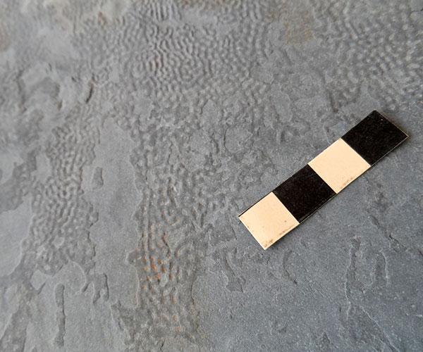 Mata microbiana como se observa en la roca,  con estructura típica de corrugaciones del Silúrico superior. Foto: Pablo Pazos.