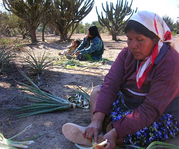 Desde hace más de 10 años María Eugenia Suárez se dedica a estudiar la etnobiología de los wichís, originarios del Gran Chaco. Foto: María Eugenia Suarez.