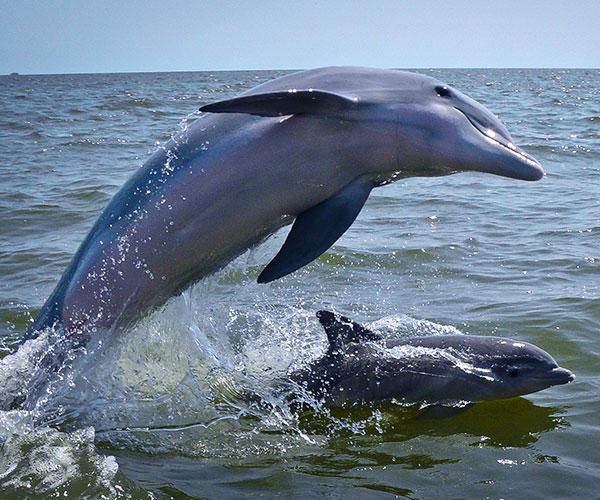 delfin_N