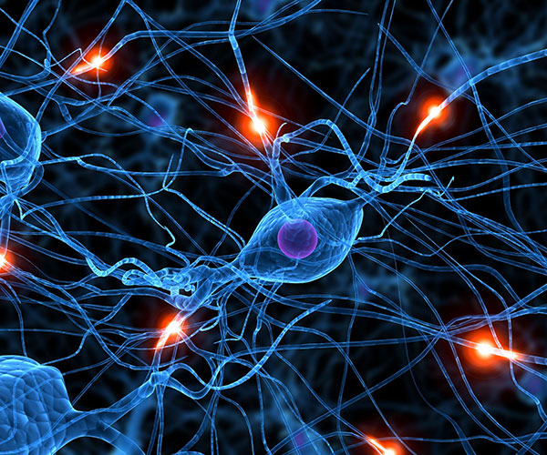 Representación artística de neuronas.
