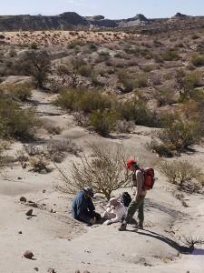 Los científicos obtuvieron las muestras de fósiles en una zona que se conoce como Formación Chañares, cerca de Talampaya, en la provincia de La Rioja.