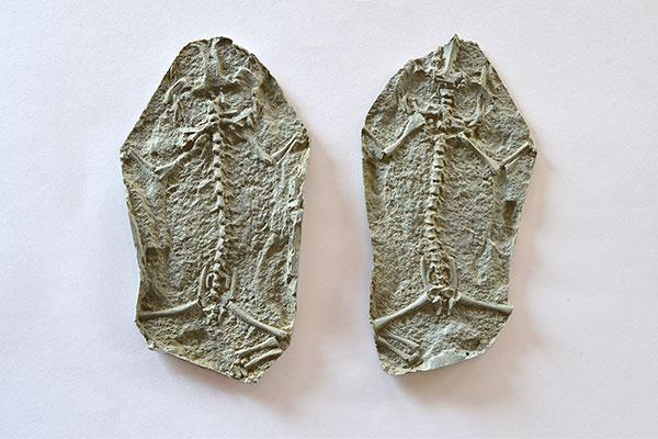 Fósil. Foto: Exactas-Comunicación