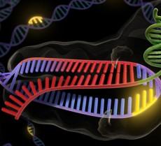 genes_T