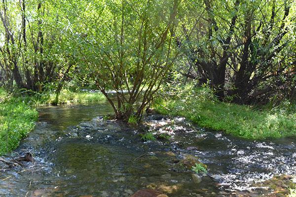 En el río Chimehuin se recogen los ejemplares de Chilina que luego son traídos hasta Ciudad Universitaria.