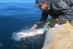tiburon_N2