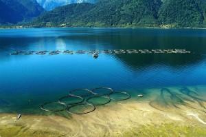 La pesca del salmón está siendo reemplazada en forma creciente por su cultivo intensivo en granjas, donde se consigue una mayor productividad y rentabilidad.