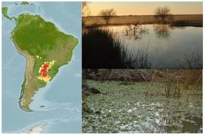 Distribución geográfica y ambientes donde viven las chanchitas. Mapa: Matías Pandolfi.