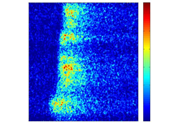 Imagen de una onda intracelular de calcio observada con microscopia. Según el código de colores de la barra lateral, cuanto más cálido más fluorescencia, por lo tanto, mas calcio. Imagen: gentileza Estefania Piegari y Lucia Lopez.