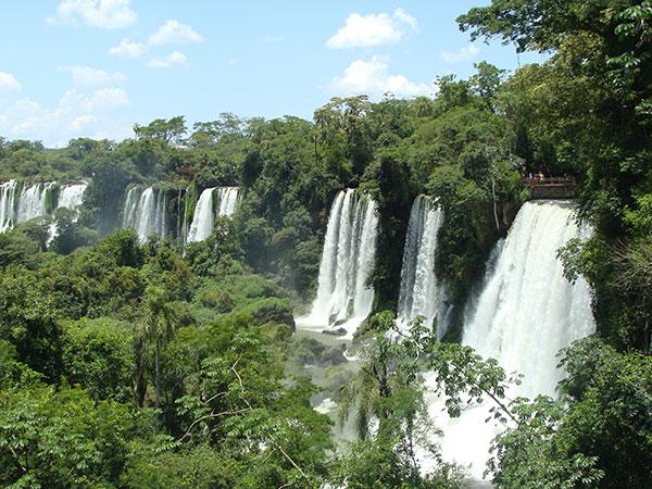 Bosques subtropicales húmedos del Parque Nacional Iguazú Foto: Gabriel Rocca. Exactas Comunicación.