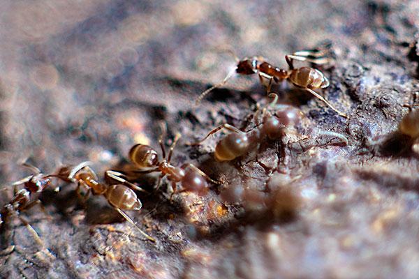 """""""Los organismos que viven en grupo constituyen un sistema interesante para estudiar los factores que afectan la toma de decisiones"""", señala la bióloga Marina Alma. Foto: David Martín :: Suki/Flickr."""