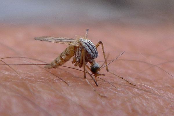 """""""El calor es una clave que los mosquitos emplean en el reconocimiento y la orientación del hospedador que no se había estudiado mucho en forma independiente"""", señala Paula Zermoglio. Foto: Global Panorama/Flickr."""