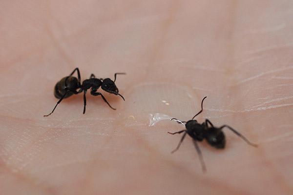 """""""Siempre me interesaron los insectos sociales, y en particular las hormigas. Siempre me pareció interesante cómo se organiza un grupo donde no hay nadie que decida por el resto de los miembros"""", cuenta Roces."""