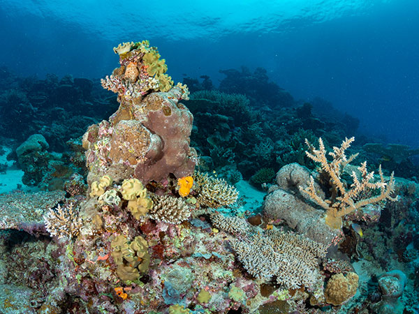 """A los arrecifesde coral se los considera como la """"jungla del océano"""", por su alta biodiversidad. Foto: Vlad Karpinskiy."""