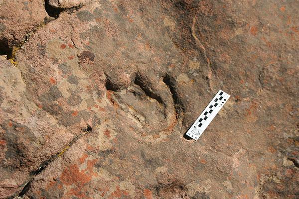 Se trata de la huella más antigua en el supercontinente de Gondwana atribuida a un dinosaurio tireóforo. Foto: Gentileza Pablo Pazos.