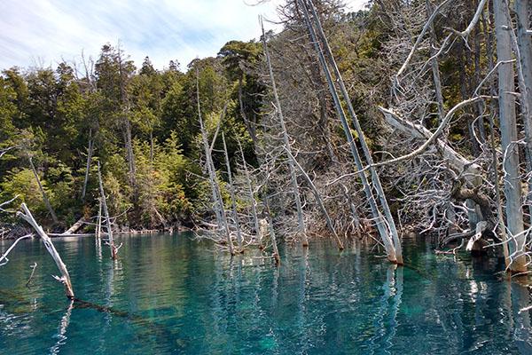 Una de las atracciones del lago Traful es la vista del bosque sumergido, un segmento de la pared montañosa que comenzó a desplazarse hacia el fondo del lago hace unos ochenta años