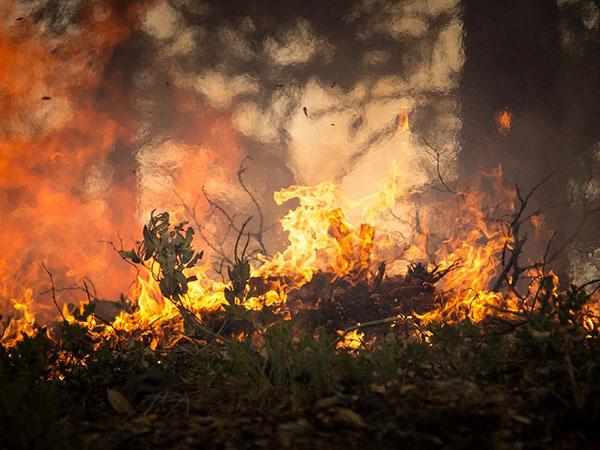 Entre enero y agosto de 2019, se detectaron casi 73 mil incendios en la región, un 83% más que en todo el año anterior. Foto: skeeze/Pixabay.