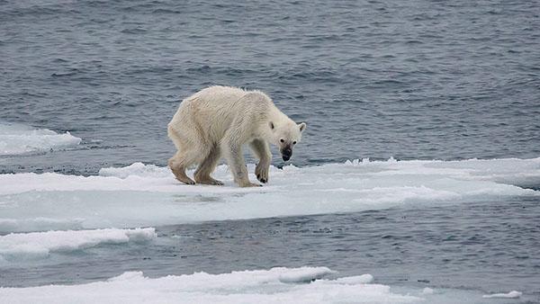 La extensión media anual del hielo marino del Ártico sufrió una disminución que ronda el 4% anual desde 1979 hasta 2012.