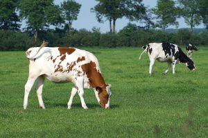 En la medida que tengamos mejor alimentación animal y mejor sanidad vamos a tener mejores índices de producción y vamos a mitigar estas emisiones