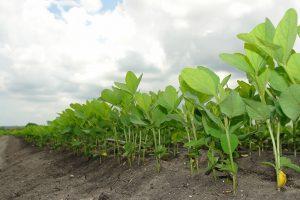 La explosión en el uso de agroquímicos tiene una estrechísima relación con los organismos genéticamente modificados.