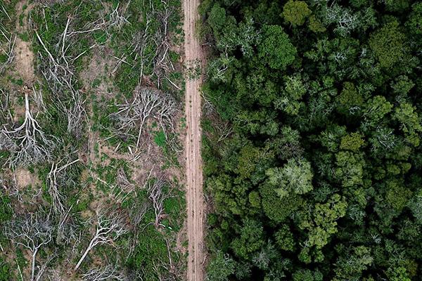 """El concepto de """"una sola salud"""" permite comprender cómo una pandemia que hoy nos afecta puede estar relacionada con la pérdida de biodiversidad, con alteraciones ecosistémicas o de la dinámica en las relaciones entre los seres que los habitan. Foto: Rhett A. Butler."""