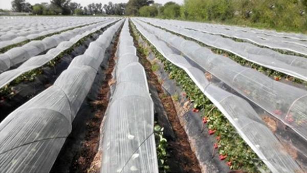 La explotación intensiva del suelo de las huertas requiere de fertilizantes y también de pesticidas. Los hongos, las bacterias, los virus y los insectos pueden arruinar fácilmente una producción.